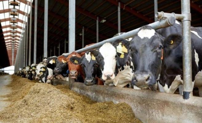 Besi ve süt yemi fiyatları! Fiyatlar üreticiyi mağdur etmeye devam ediyor!