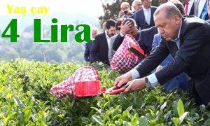 Cumhurbaşkanı Erdoğan yaş çay alım fiyatını açıkladı.