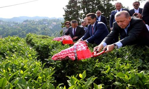 TTB Başkanı Ergan: Özel sektörü mağdur etmeyecek, ayakta tutacak alım ve fiyat politikaları asla ihmal edilmemelidir