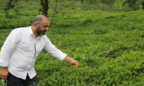 TTB Başkan Yardımcısı Çakıroğlu: Kuru çay fiyatında aynı paralelde düzenleme yapılmalı
