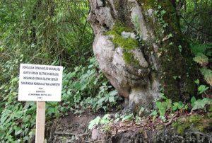 Orman İşletme Şefliği koruma altına aldı