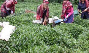 Karali Çay'dan çevre dostu üretim
