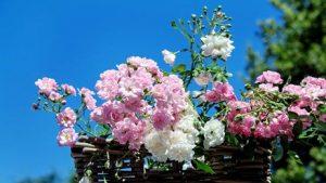 Çiçekte dünya lideriyiz…
