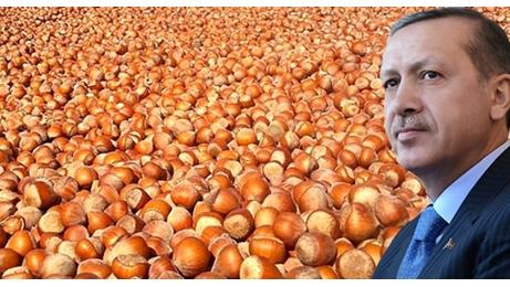 Fındıkta İpler Cumhurbaşkanı Erdoğan'da
