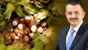 Bakan Pakdemirli hasatta önce fındık fiyatlarının açıklanması için çaba gösteriyoruz