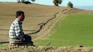 Mahsulü tarlada kalan çiftçide 'La Nina' korkusu