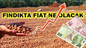 FINDIK FİATINDA REKOR BEKLENTİSİ!