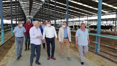 İzmir Damızlık Sığır Yetiştiricileri Birliği Başkanı Ahmet Kocaağa, Tek fiyat uygulayacağız